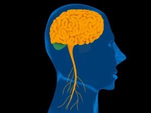 mozog 2